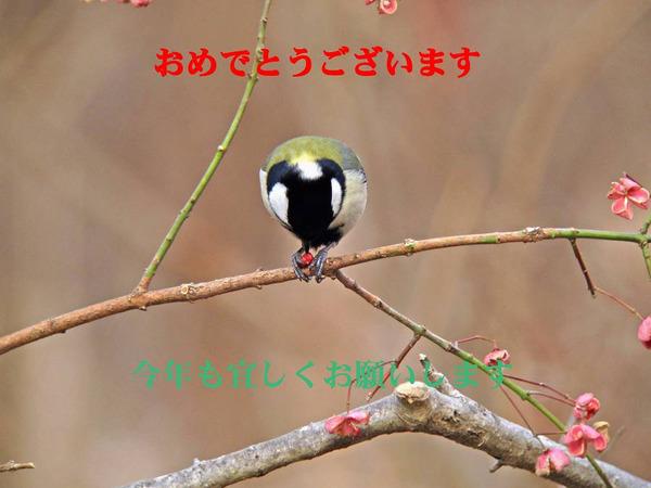 Img_6738s_2